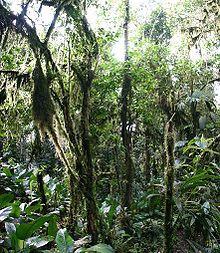 Wilgotny las równikowy – Wikipedia, wolna encyklopedia