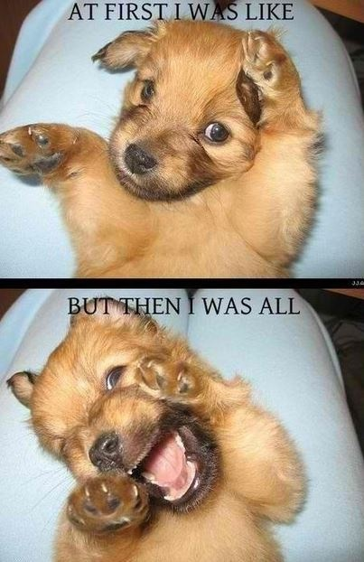 Hilarious puppy. Who comes up with the great captions for the photos?