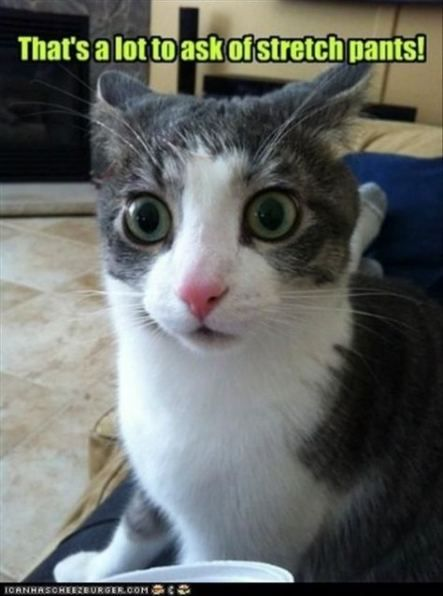 63 Ideas Cats Funny Laughing So Hard Sweets – Cats -♡-