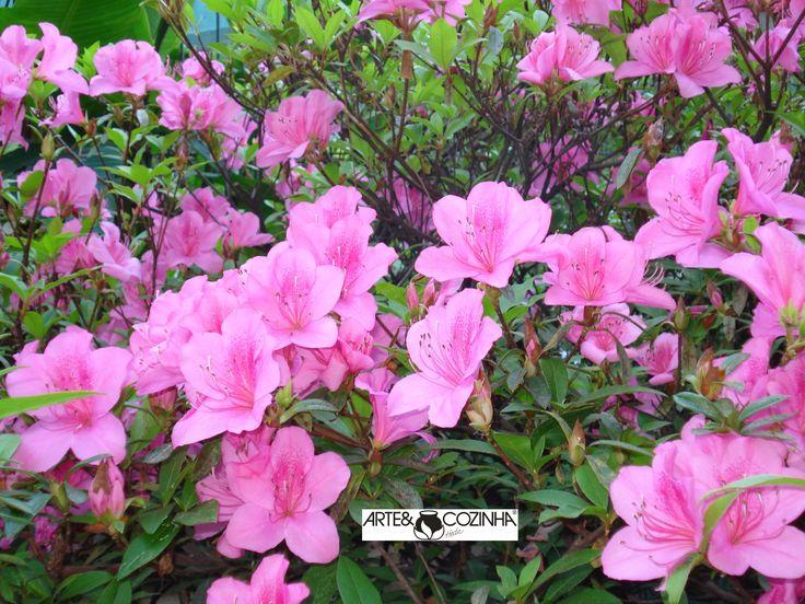 A azaléia é uma planta originária do Japão e da China. Fotografia:Simone Seffrin