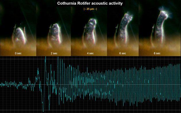 Akustiker will außerirdisches Leben erlauschen . . . http://www.grenzwissenschaft-aktuell.de/ausserirdisches-leben-erlauschen20151006 . . . . Abb.: Dan Slater
