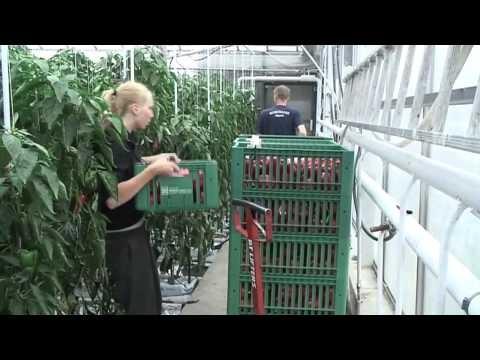 Omväxlande arbete - J. Lindèns Grönsaker -video