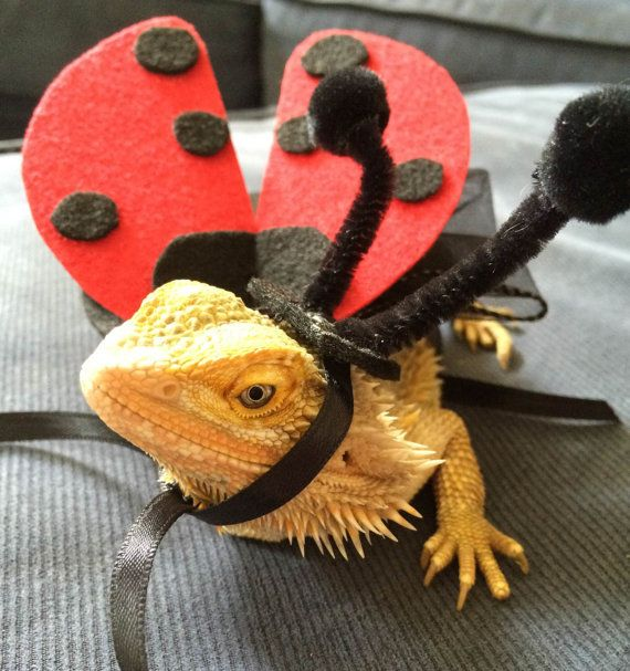 ladybug and bumble bee costumes for bearded dragons handmade