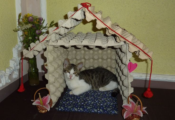 How to make a cat house from recycled egg trays
