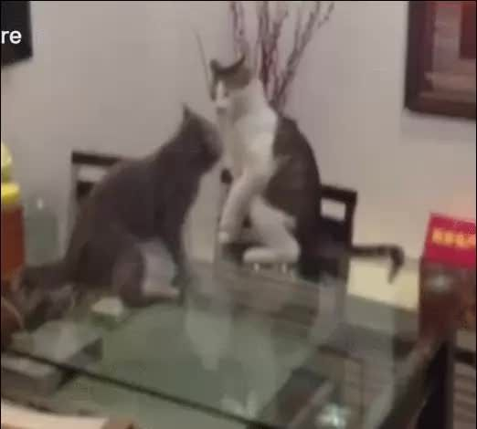 UFC - Ultimate Fighting Cats - 9GAG