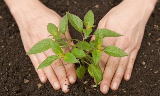 Cómo sembrar semillas de durazno en casa - IMujer