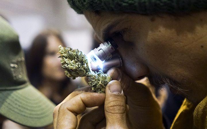 Uruguay's Cannabis Cup Crowns Top Indoor Outdoor Growers