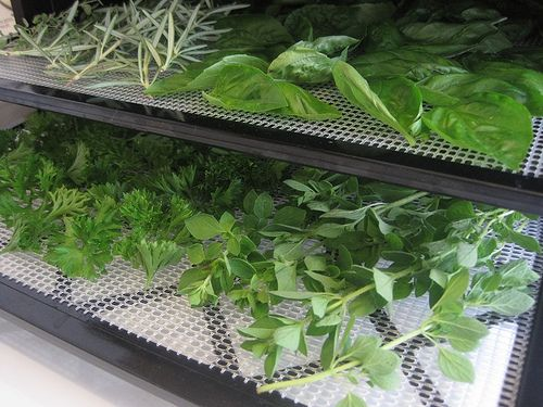 Gardening with Herbs 101: Preserving Your Herbs - Keeper of the Home
