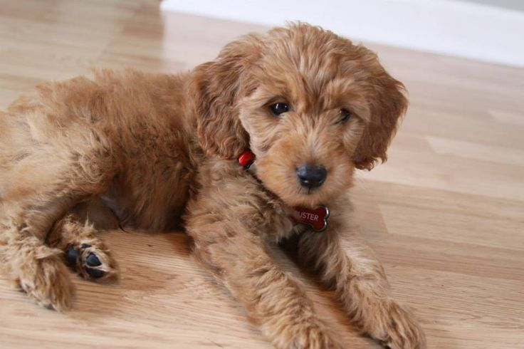 The dog I want to get someday !