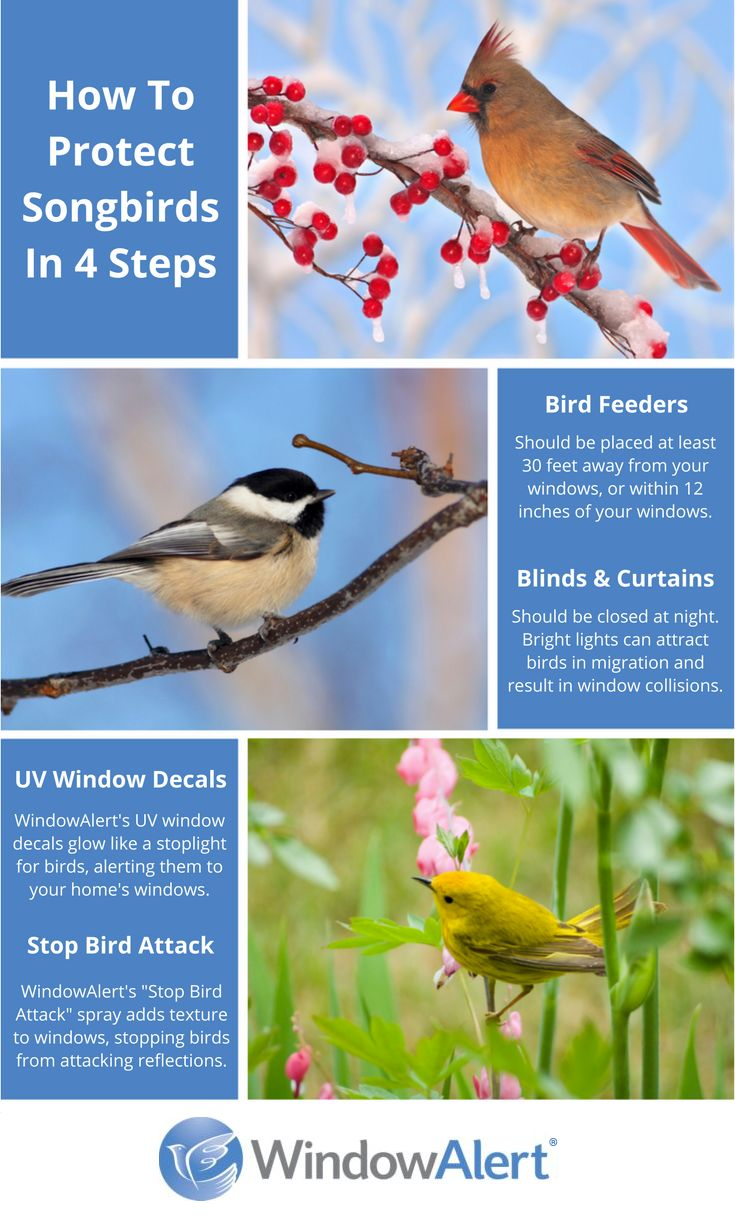 How to protect songbirds in 4 easy steps: 1. Make sure you place bird feeders a safe distance from your windows. 2. Close blinds and curtains at night so birds in migration aren't attracted to the lights in your home. 3. Use WindowAlert's UV decals to alert birds to your windows and prevent bird-window collisions. 4. Use WindowAlert's Stop Bird Attack spray to add texture to your windows and prevent birds from attacking their reflections. Visit WindowAlert.com to learn more.