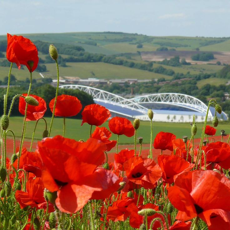 Is there a more picturesque setting for a football ground? My brother, Mike's photo of the Amex Stadium viewed from Stanmer Park Brighton.