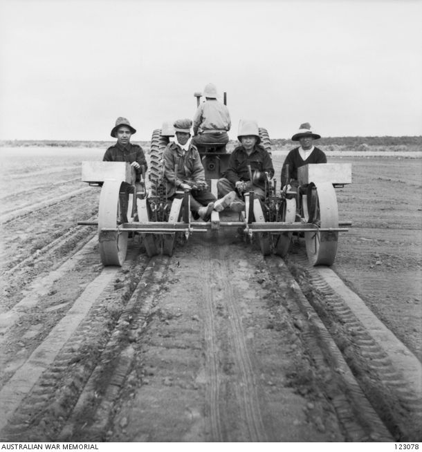 BARMERA, SA 1944-04. NO. 9 CAMP NURSERY, LOVEDAY INTERNMENT GROUP. JAPANESE INTERNEES USING A