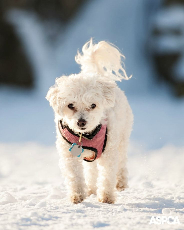 Our Top 10 Cold Weather Pet Care Tips www.aspca.org/pet-care/cold-weather-tips