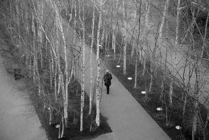 Image result for tate modern birches