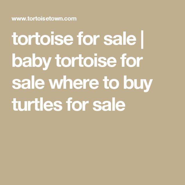tortoise for sale | baby tortoise for sale where to buy turtles for sale