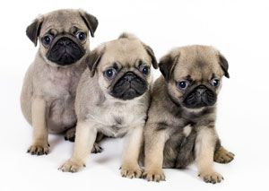 Pet Shipping Service-How To Ship A Pet http://www.familypetrelocations.com/pet-shipping-pet-transport/#