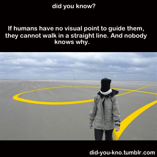 fun fact: humans can't walk in a straight line. What?!
