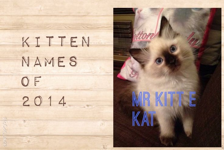 Here are all the kitten names chosen by clients at Walkerville Vet in 2014