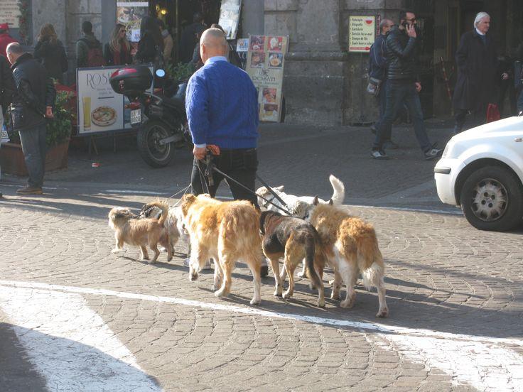 Napoli, dog sitter a Piazza Trieste e Trento