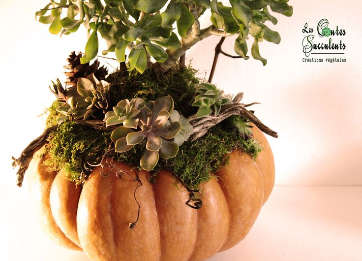 ... automne - Décoration hallowen - Succulent Pumpkins - Fall decoration