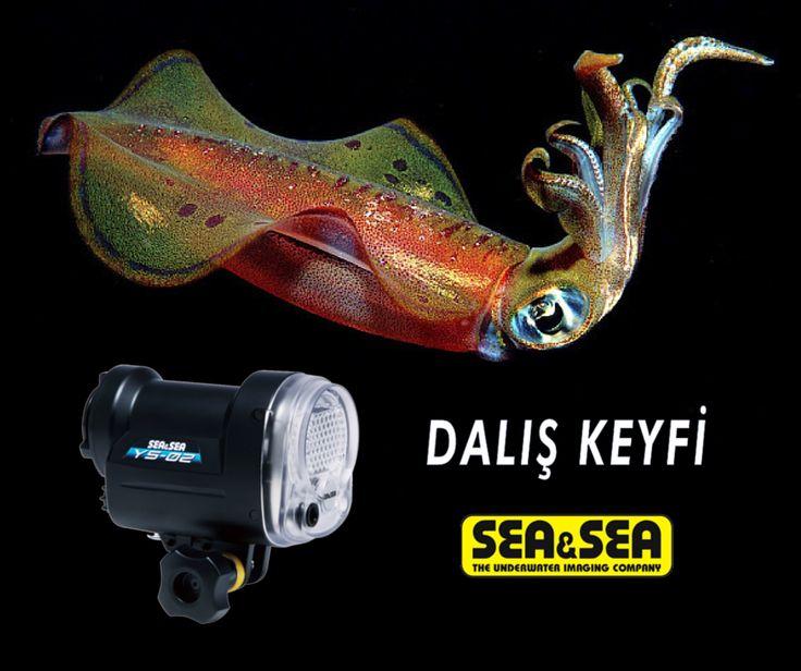 Kompakt makine kullanıcıları için Sea & Sea YS-02 Flaş. Sualtı fotoğraflarınızdaki renkler sizi şaşırtacak. Üstelik 9 TAKSİT. http://www.daliskeyfi.com/seavesea-ys-2-flas-pmu7