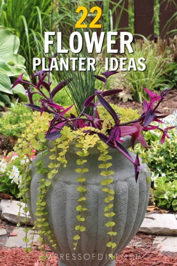 8 Bold And Colorful Flower Pot Ideas Care Tips Flower