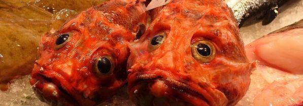 ¿Te gusta el pescado de roca?