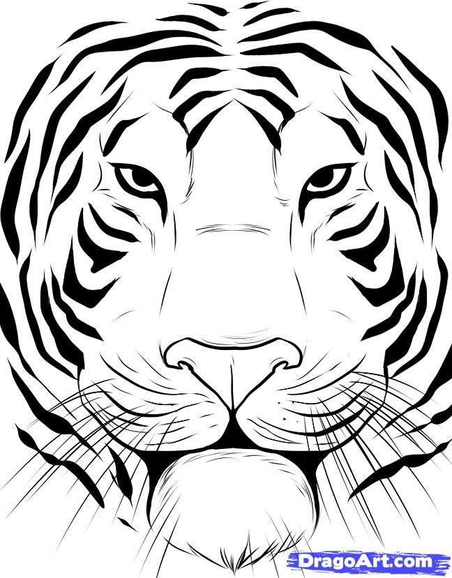 how to draw a tiger face step 6