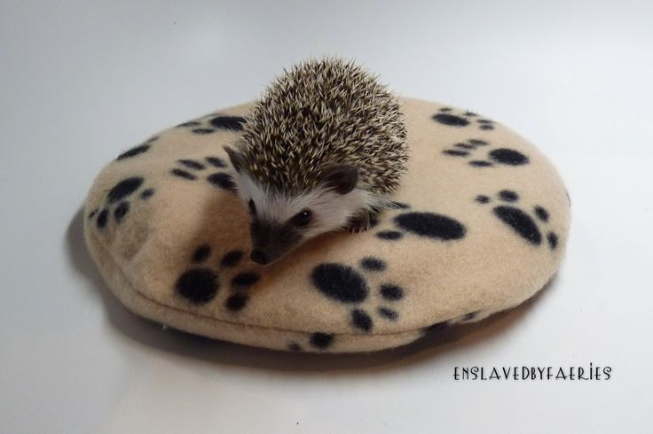 hedgehog heaters | Quills & Chills: SnuggleSafe Heating Pad For Hedgehogs This is going to be henrys Christmas present:)