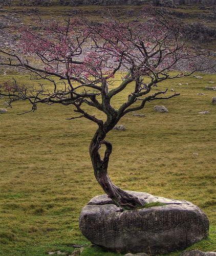 Die Wurzeln des Bäumchens sind so stark, dass sie…