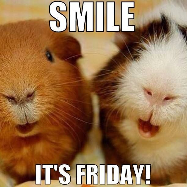 """Smile, it's Friday"" and there are guinea pigs to play with."
