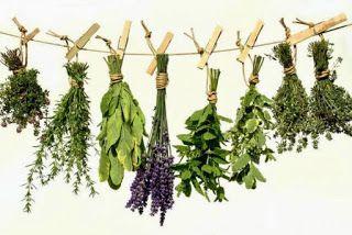 Η φύση διαθέτει μια αφθονία από αρωματικά βότανα που όχι μόνο είναι απολαυστικά όταν μπαίνουν στο πιάτο ή την κούπα σας, αλλά καταπραΰνου...