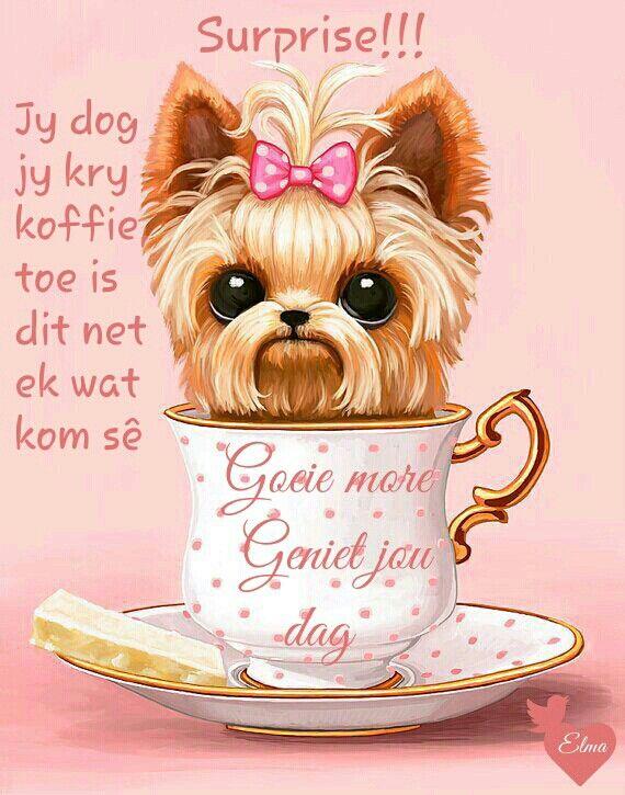 Goeie Môre / Good Morning ☕️☕️