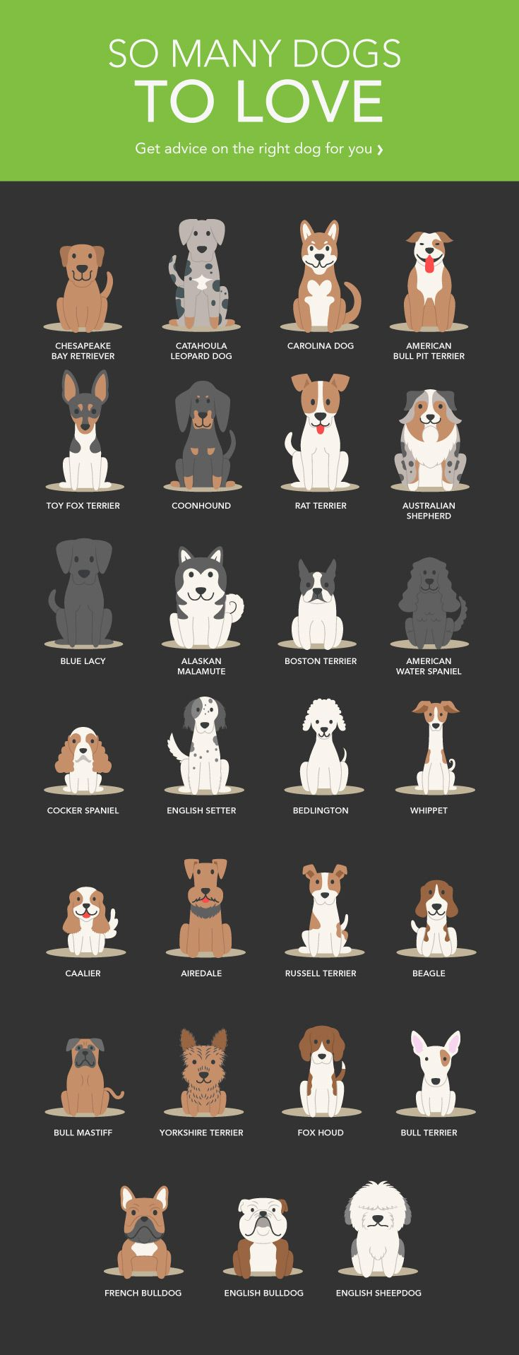 What Kind of Dog Should I Get?