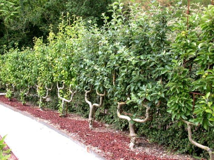 Epingle Par Fred Sur Jardins Arbre Fruitier Jardin Fruitier