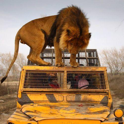 Parque Safari, para sentirse como en Africa