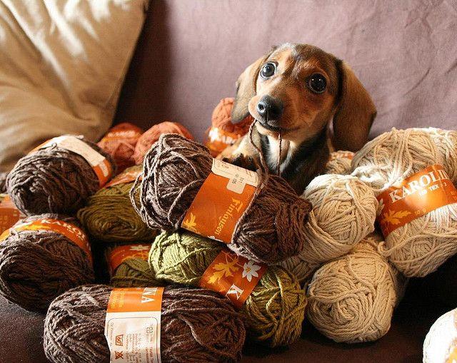 The cutest yarn thief/craft assistant!