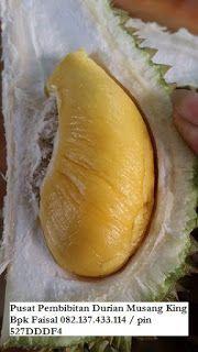 Durian Musang King Produk Asli Indonesia Tidak kalah rasanya dengan Durian Musang king di Tempat asalnya malaysia. Creamy, manis legit dan berbiji kempet....sangat recomended untuk ditanam...