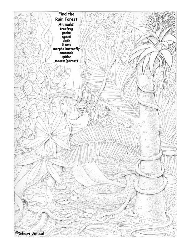 Rainforest animals search & find
