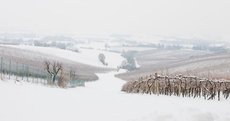 Let it snow! #umbertocesari #wine #winter #sangiovese