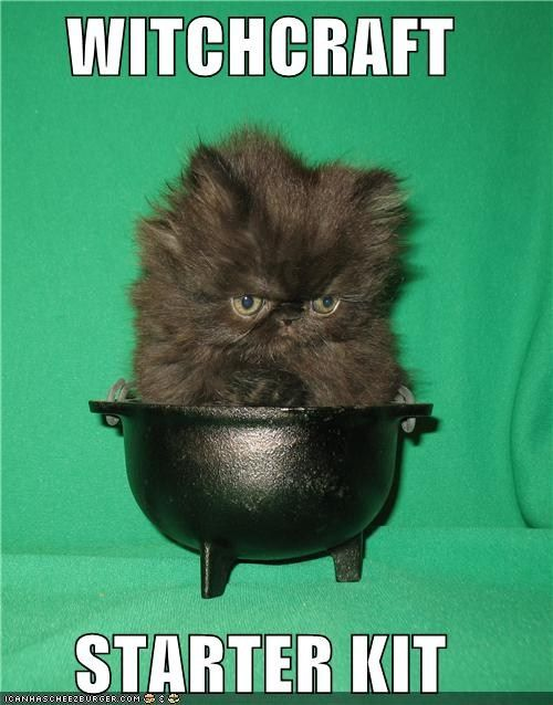 I have the black cat. I need a reliable cauldron and an awesome hat. ;)