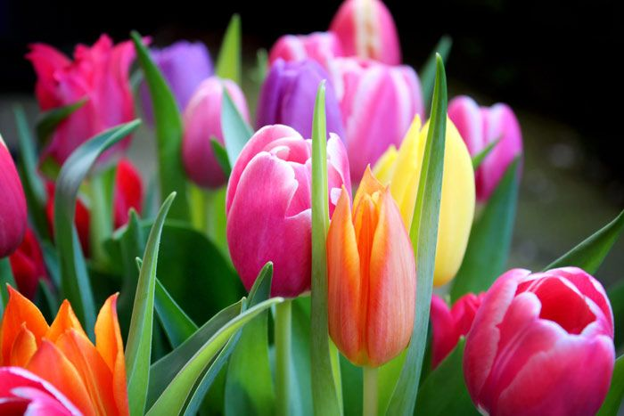 Fruhlingsbilder Fruhling Kostenlose Bilder Download Titania Foto Fruhling Bilder Schone Blumen Bilder Schone Bilder Natur