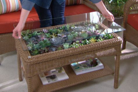 How to make a beautiful terrarium coffee table using colorful, easy-to-maintain succulents.