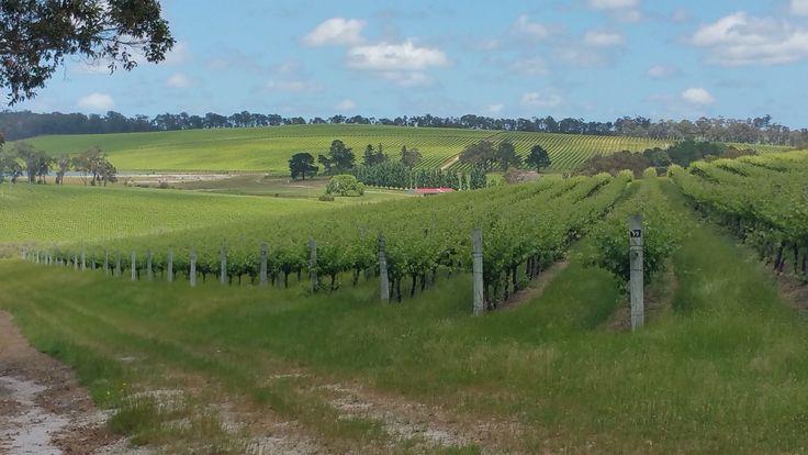 Vineyards Margaret River WA