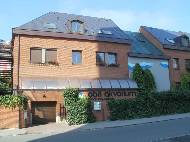 Dům ENVY - Obří akvárium, Baarova ulice 1663/10, Hradec Králové 2, 500 02, Česká republika. - - ENVI DŮM - Největší sladkovodní akvárum v Evropě. Nachází se v samém centru Hradce Králové má svým návštěvníkům nabídnout bezprostřední kontakt s tropickou přírodou, chvíle odpočinku a sportu.  - - -  Vstupné - dospělí 120,- Kč, děti a důchodci 80,- Kč, děti do 2 let zdarma.  - - -  Otevřeno: celoroční od 11:00  do  16:00 hod, v době školních prázdnin od 9:00 hod do 18:00 hod. V pondělí vždy…