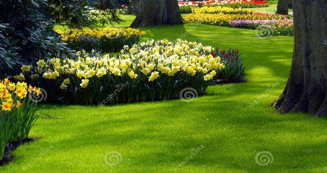 Quali sono i Fiori tipici da giardino a Primavera? I fiori colorano giardini aiuole e prati, la natura a primavera si risveglia in tutto il suo splendore...