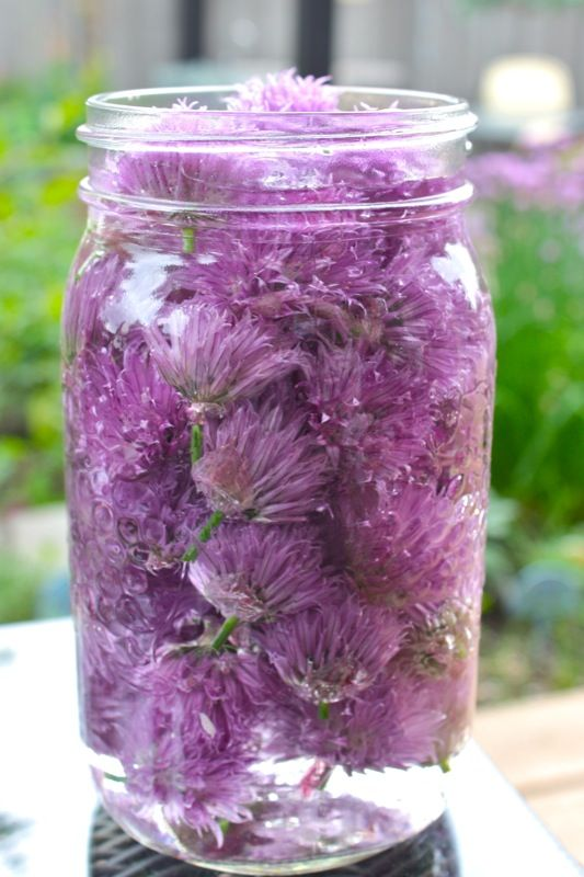 Chive blossoms are fabulous in omelets or potato salad!  I make chive blossom vinegar!  Just place the clean blossoms in a jar and fill with Champagne vinegar...leave sit a few weeks before straining and putting in bottles!  Amazing color and flavor for any salad dressings!