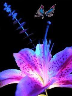 Obrázky květin,kytek ke stažení zdarma.Největší databáze na internetu!