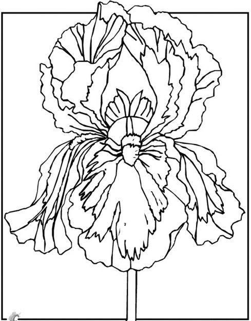 трафареты для рисования на ткани2 | Цветочные раскраски ...