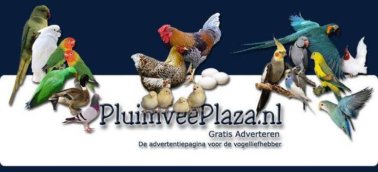 Vraag & Aanbod Kippen en ander Pluimvee www.pluimveeplaza.nl